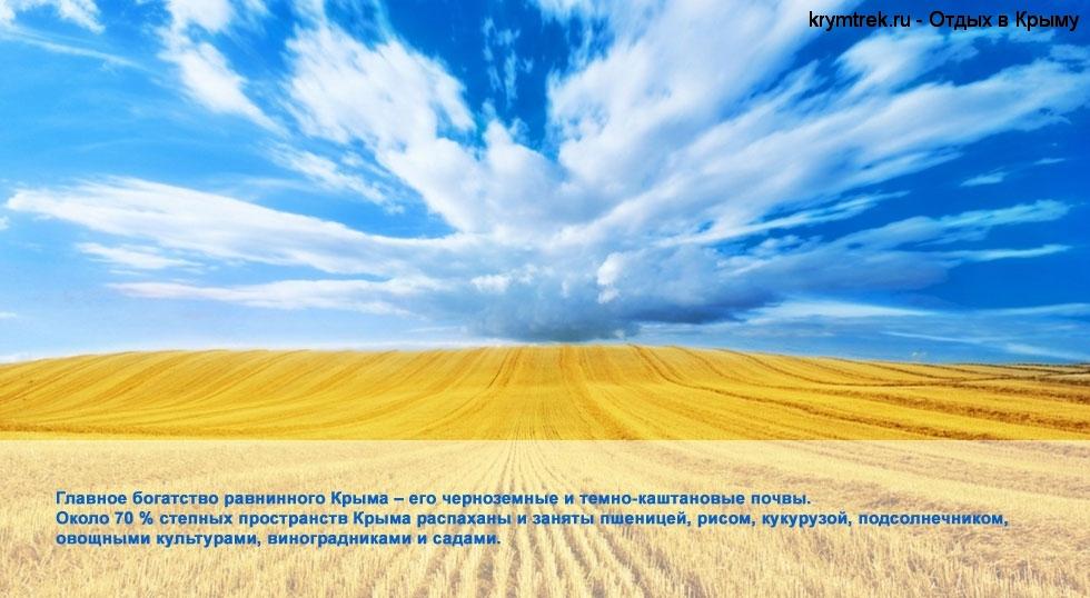 Главное богатство равнинного Крыма – его черноземные и темно-каштановые почвы. Около 70 % степных пространств Крыма распаханы и заняты пшеницей, рисом, кукурузой, подсолнечником, овощными культурами, виноградниками и садами.