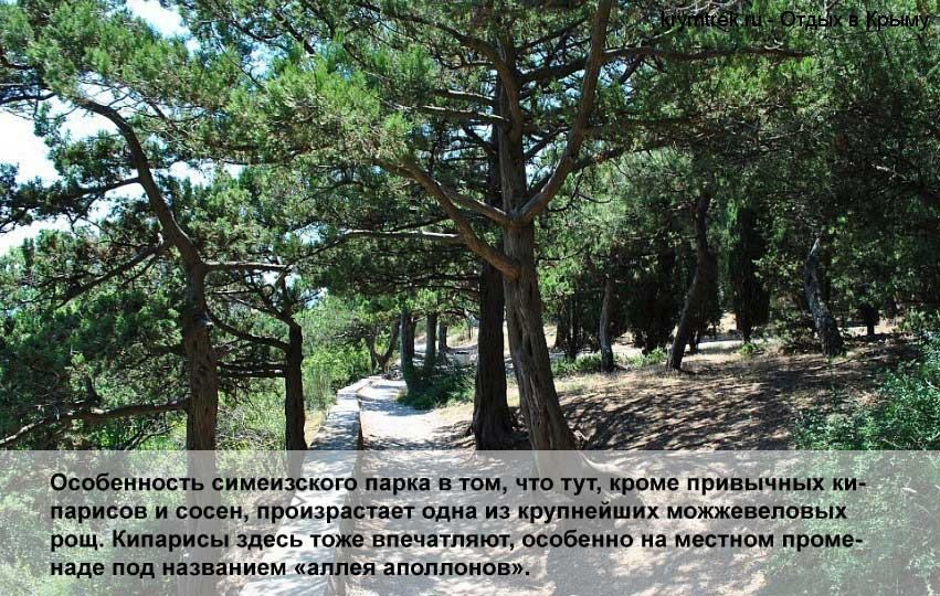 Особенность симеизского парка в том, что тут, кроме привычных кипарисов и сосен, произрастает одна из крупнейших можжевеловых рощ. Кипарисы здесь тоже впечатляют, особенно на местном променаде под названием «аллея аполлонов».