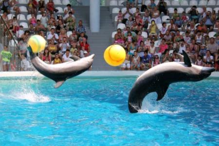 Хотите, чтобы отпуск был не забываем?  Тогда Вам - в Крым! В - Судак! И в - «Немо» - дельфинарий!