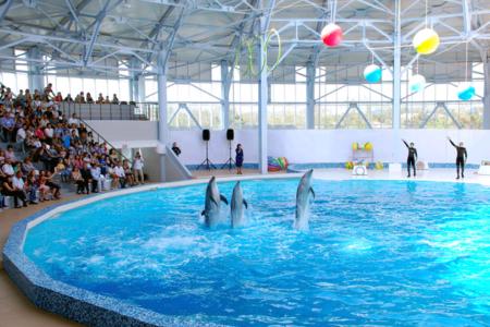 Уникальные возможности обитателей дельфинария Алушты