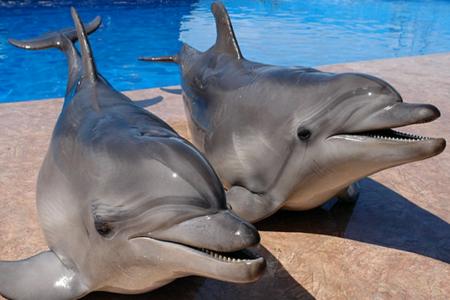 Лучший дельфинарий в Севастополе