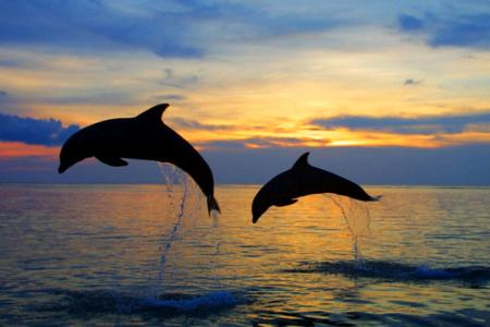Такой удивительный черноморский дельфин
