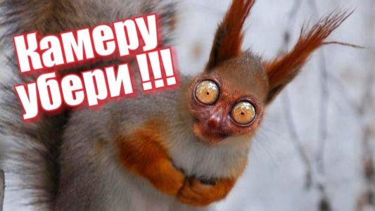 ПОПРОБУЙ НЕ ЗАСМЕЯТЬСЯ!! СВЕЖИЙ ПРИКОЛ! Смешное видео! Крым. FUNNY ANIMALS Try not to LAUGH